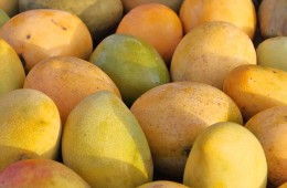No Fruit Were Mango-ing Mad Over Here in Dubai